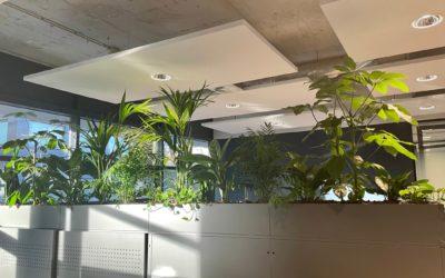 Wat doet groen op kantoor?